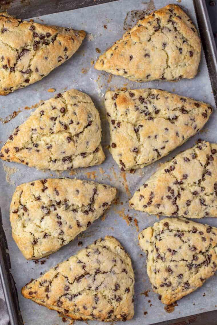 Eight chocolate chip scones on a baking sheet.